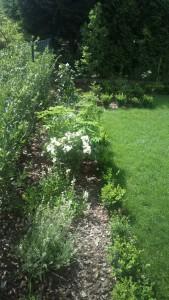 Ogród przy bloku z wielkiej płyty - zdjęcia po realizacji