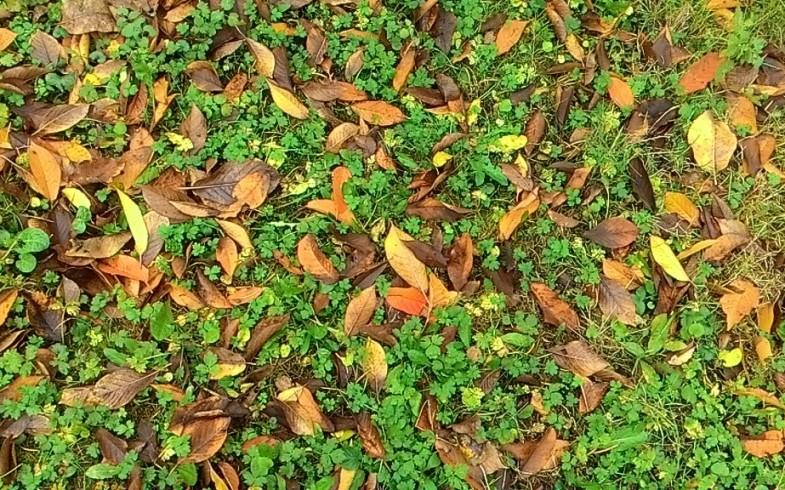Jak przygotować trawnik do zimy?