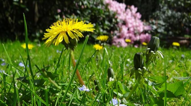 Kwitnąca łąka