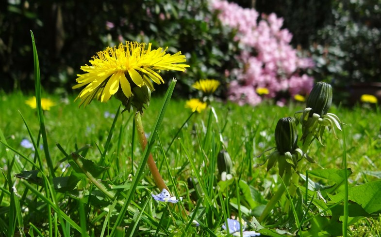 Kwitnąca łąka – marzenie wielu właścicieli ogrodów