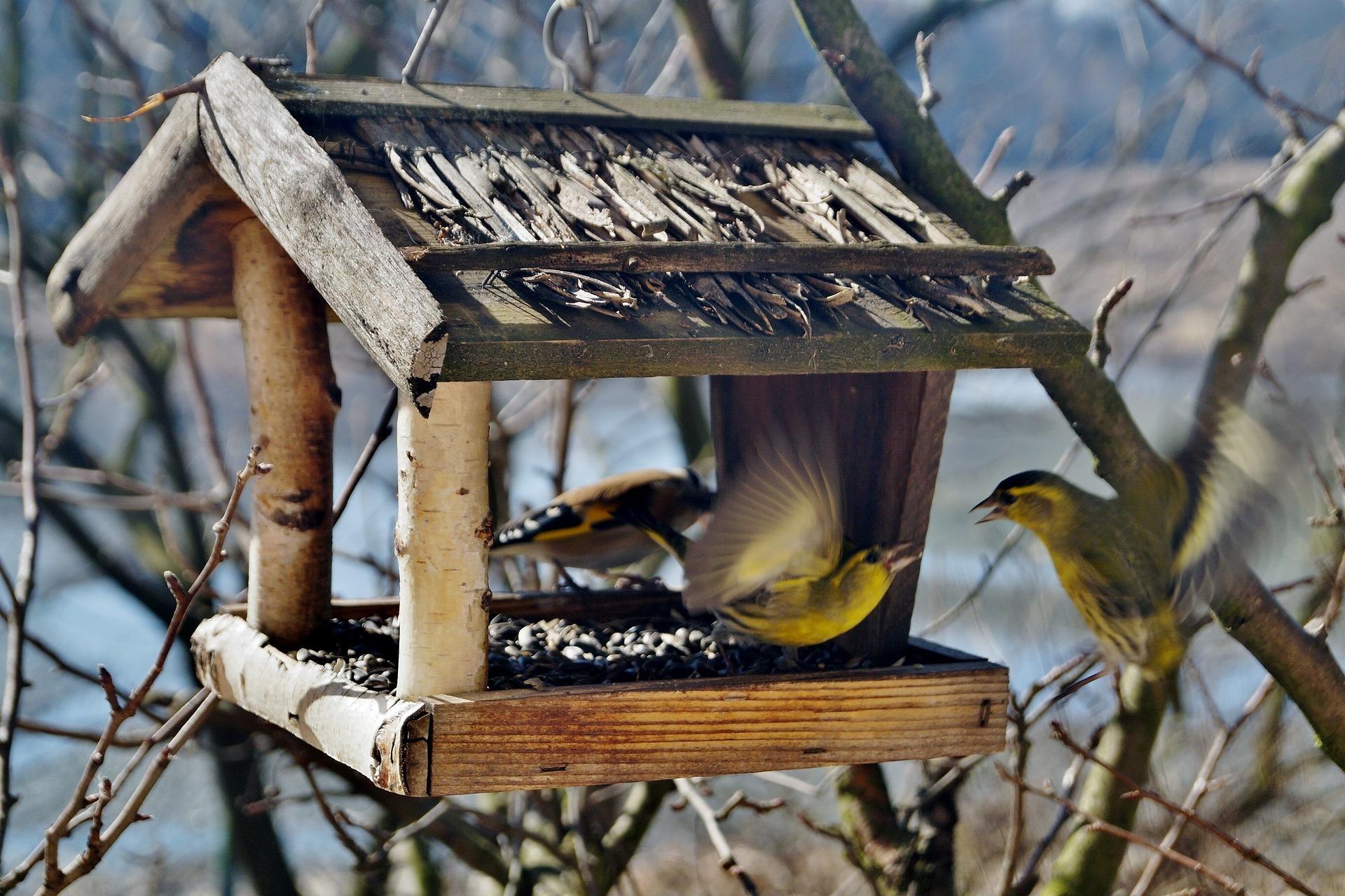 Karmnik dla ptaków własnoręcznie zrobiony