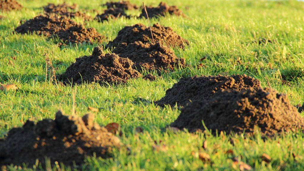 Jak zabezpieczyć ogród przeciwko kretom i innym szkodnikom
