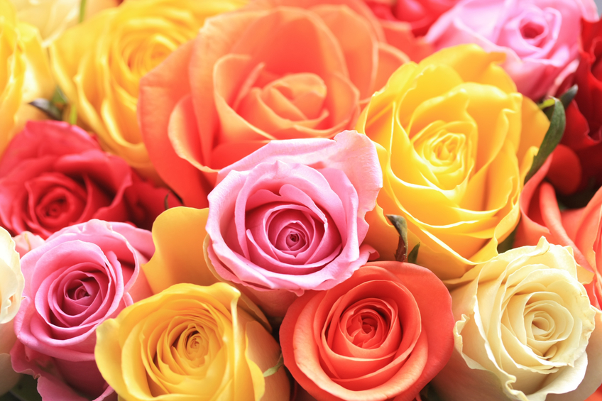 Jakie kwiaty wysłać przez internet?