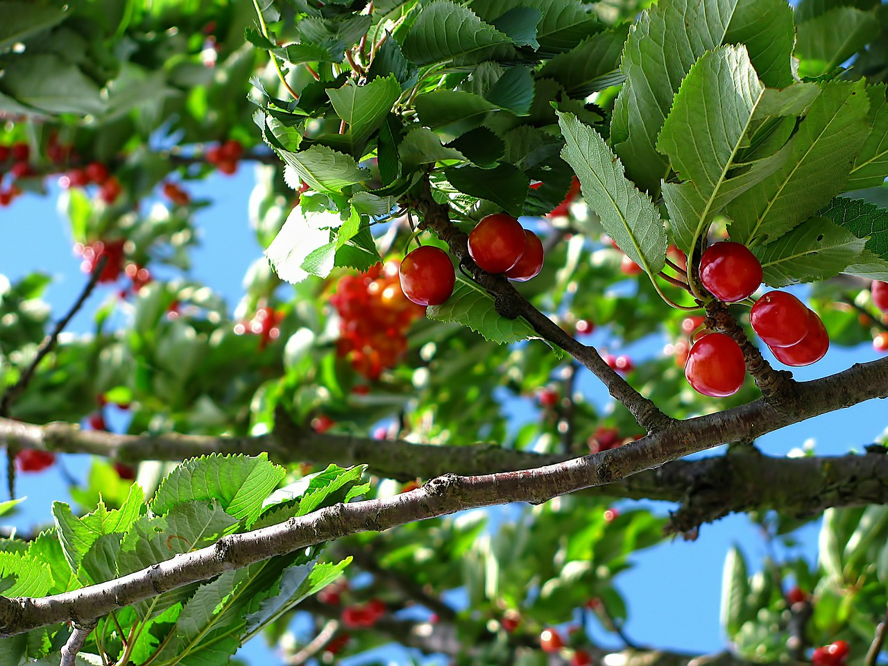 Jesienne opryski drzew owocowych