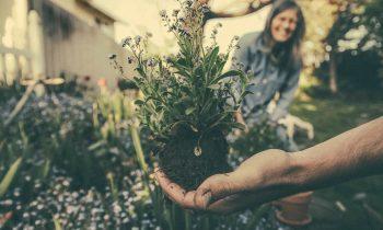 Maj – jakie prace należy wykonać w ogrodzie?