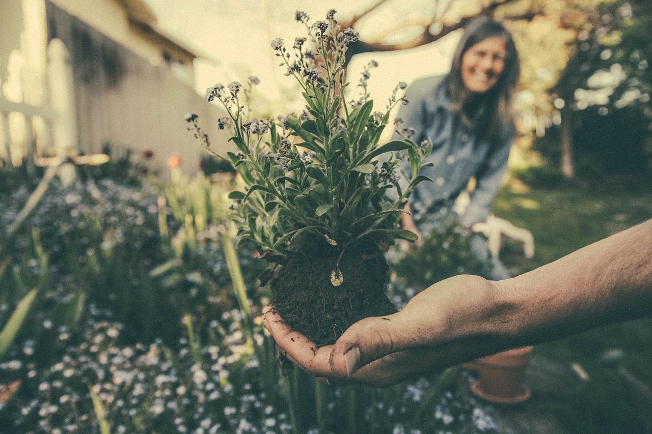 Maj – jakie prace należy wykonać w ogrodzie