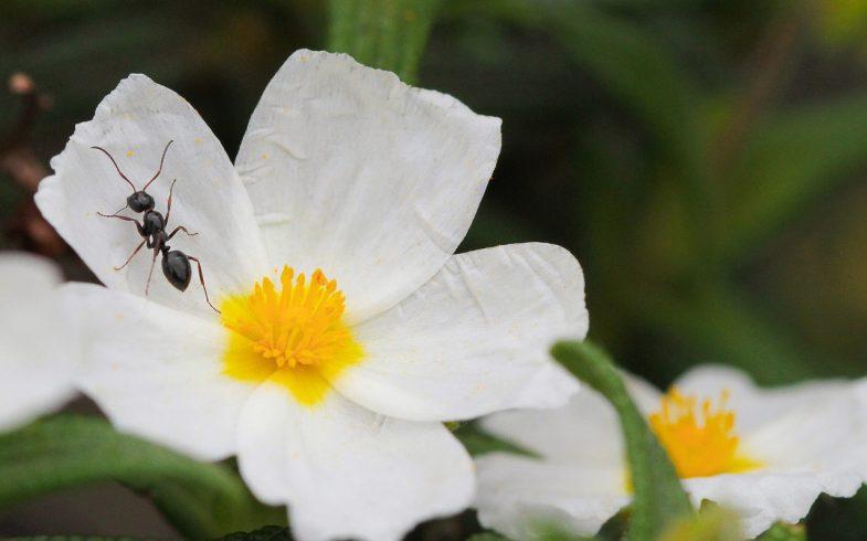 Jak skutecznie zwalczyć mrówki w ogrodzie?