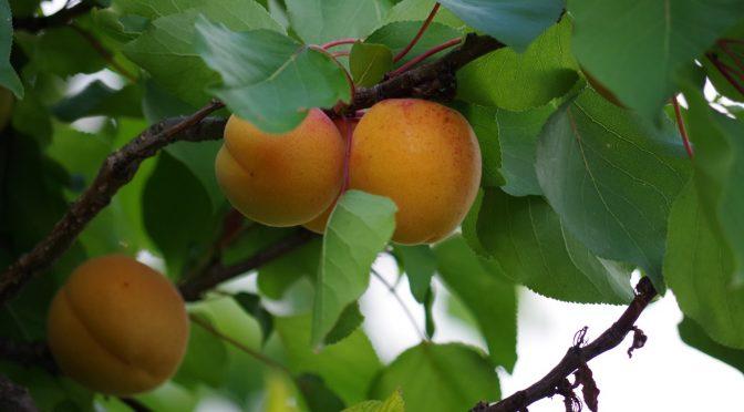 Lipcowe prace w ogrodzie – o czym należy pamiętać?