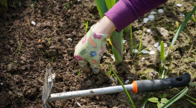 Sierpniowe prace w ogrodzie