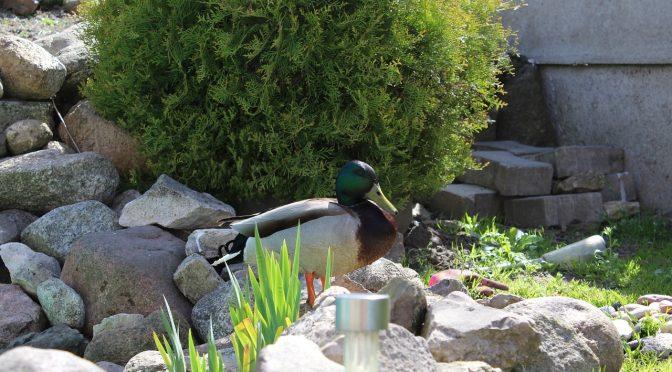 Wrzesień - jakie prace w ogrodzie należy wykonać?