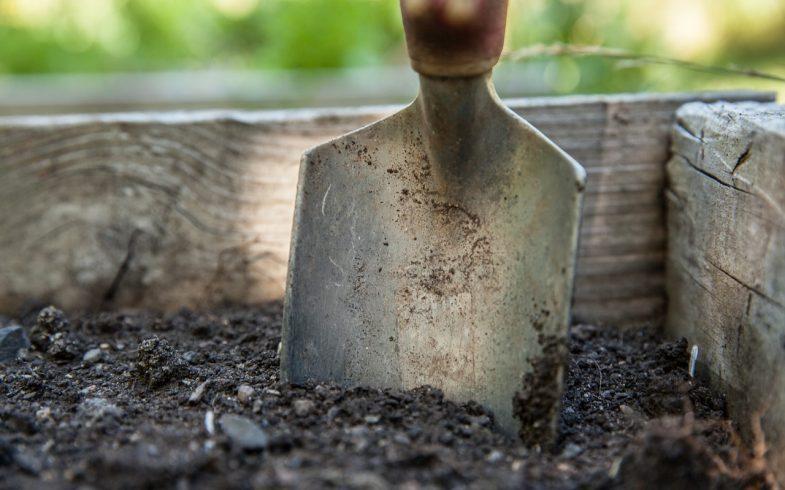 Gleby kwaśne, obojętne i zasadowe. Jaka to różnica?