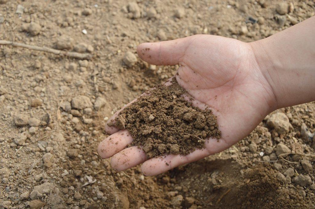 Rodzaje gleby w ogrodzie