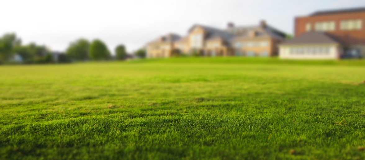 jak zadbać o trawnik po zimie