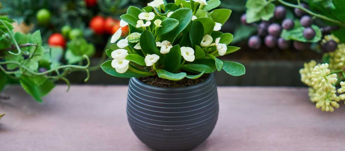 kwiaty domowe dla zapracowanych