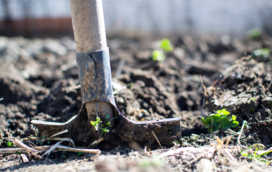 Jak przygotować ogród na wiosnę