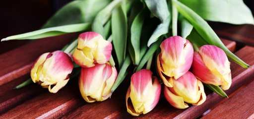 jak dbać o cięte kwiaty