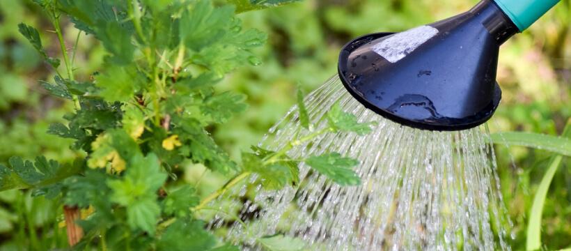 Nawadnianie ogrodu - jak nawadniać rośliny