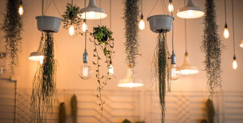 Jak dbać o rośliny w domu? Pielęgnacja roślin doniczkowych zimą.