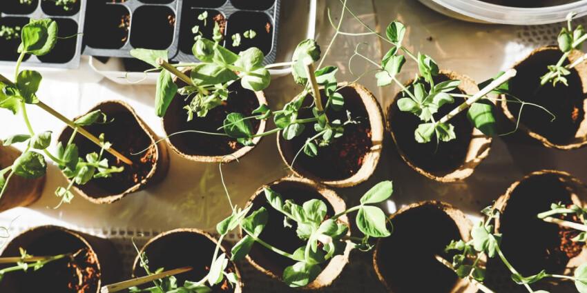 Sadzenie roślin w lutym