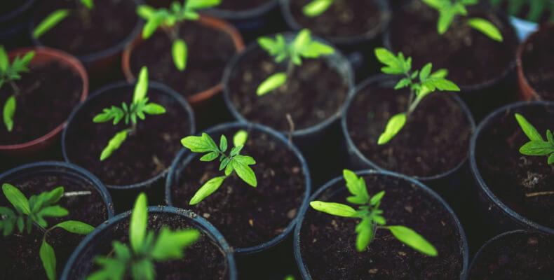 rośliny wysiewane w lutym