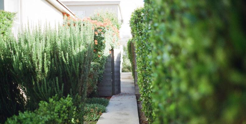 Jak zaprojektować ogród przed domem
