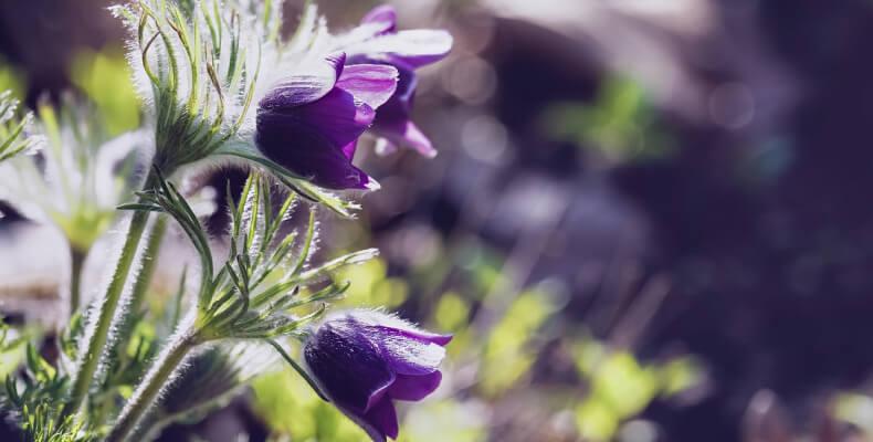 kwiaty sadzone w czerwcu
