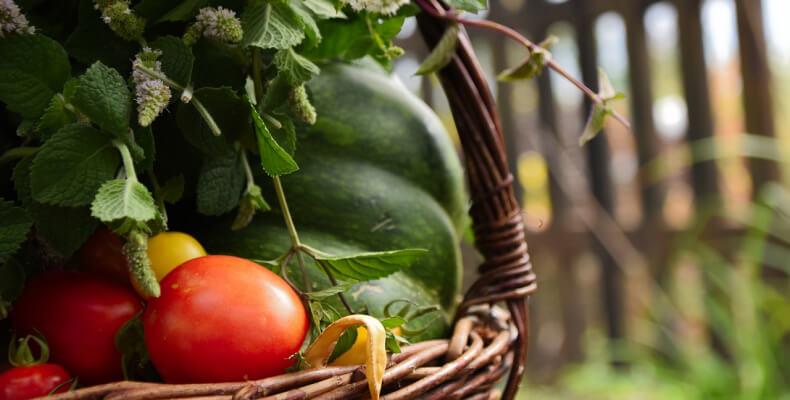 wiejski ogród warzywa