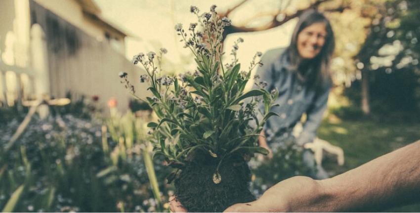 Sadzenie kwiatów na jesień
