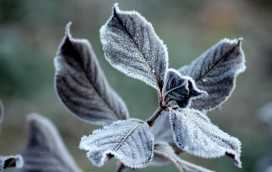 Zabezpieczanie roślin przed zimą