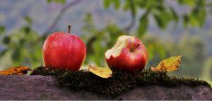 Sadzenie drzew owocowych - jak i kiedy