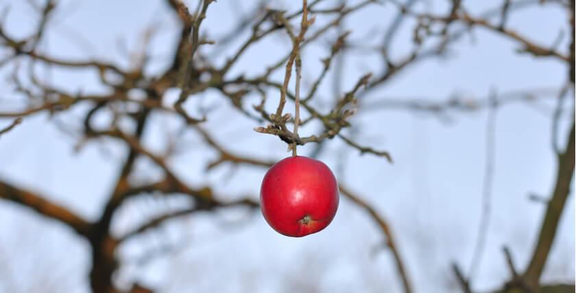 Sadzenie drzew owocowych jesienią