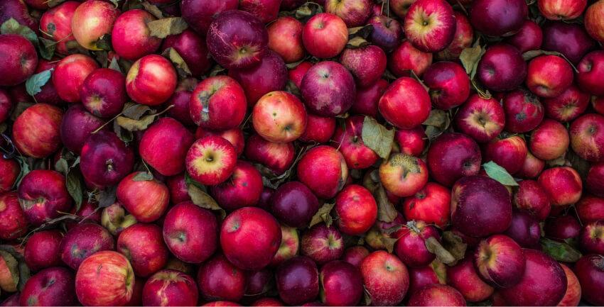 Jak przechowywać jabłka zimą