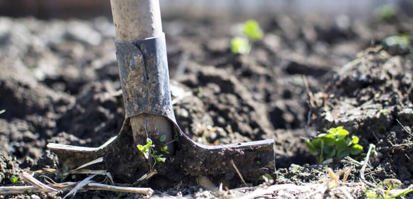 Podstawowe narzędzia do pielęgnacji ogrodu
