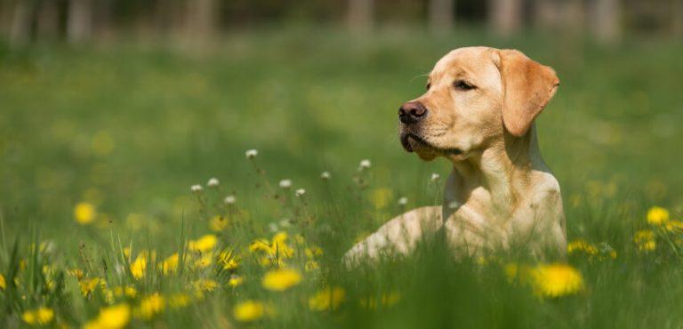 Rośliny ogrodowe trujące dla psa