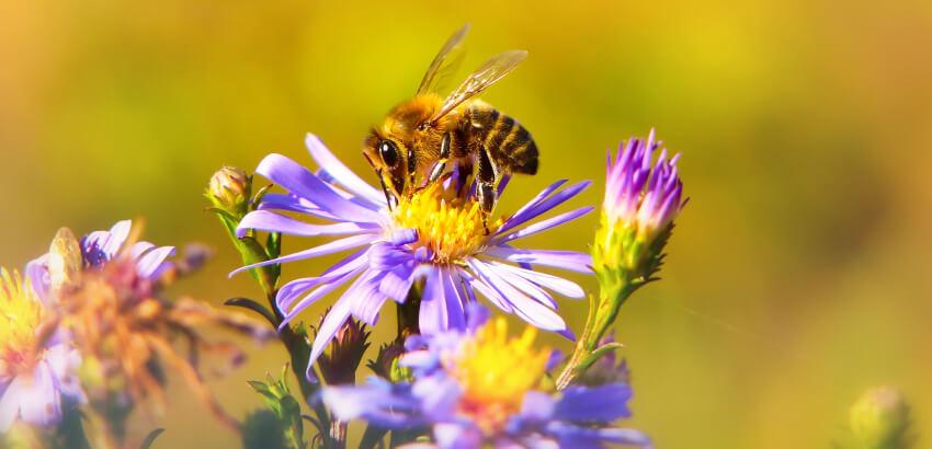 Rośliny dla pszczół