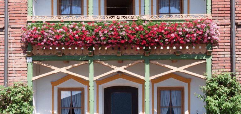 Jakie rośliny na balkon
