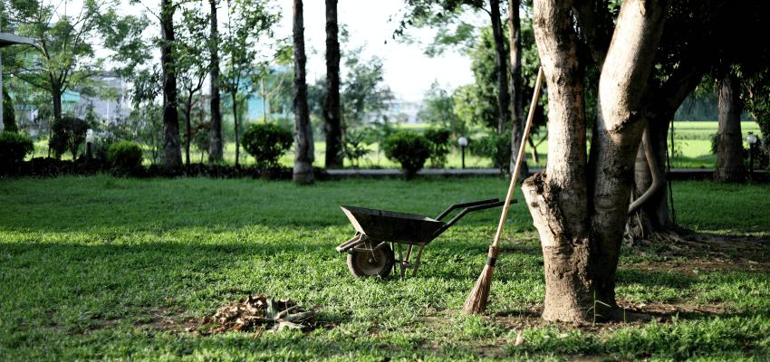 Niezbędne narzędzia do pielęgnacji ogrodu
