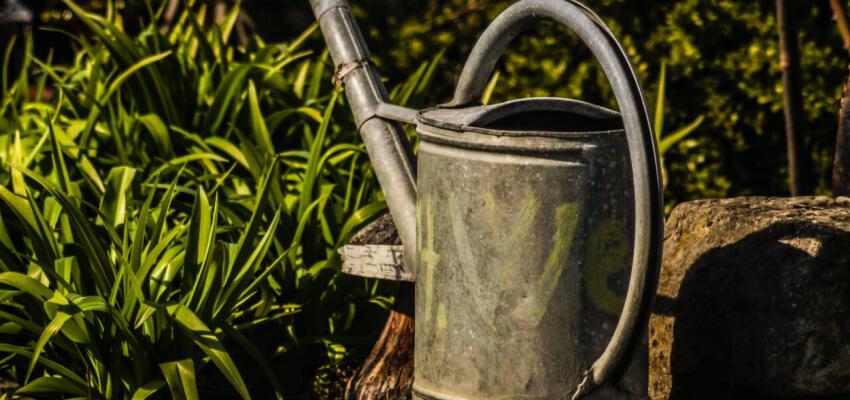 Ogród w czerwcu - podlewanie