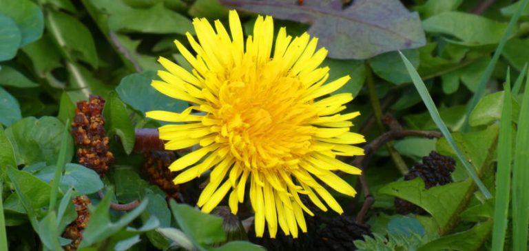 Chwasty w ogrodzie - jak się pozbyć chwastów