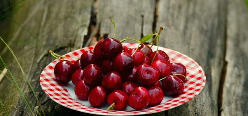 Lato to czas zbioru wielu owoców