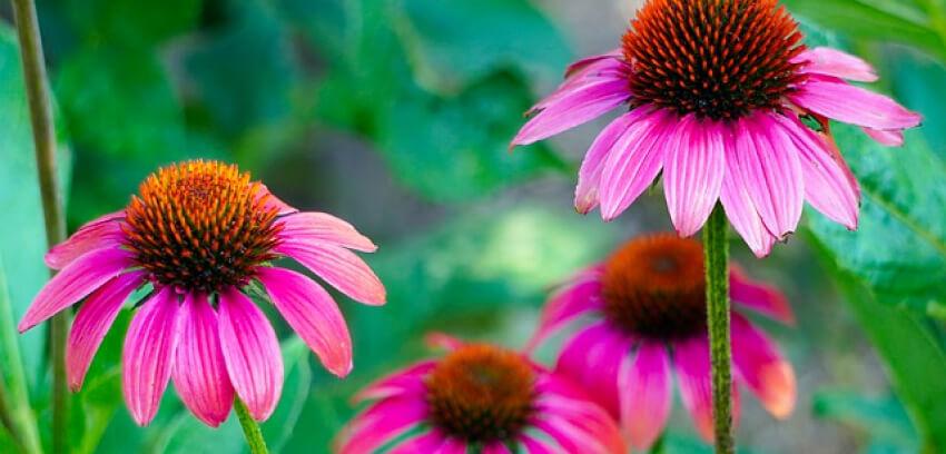 Kwiaty w sierpniu w ogrodzie
