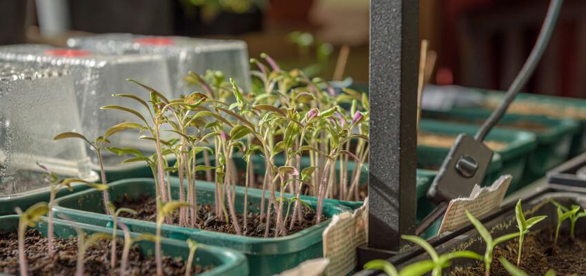 Co można sadzić w szklarni