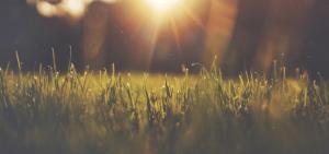 Wapnowanie trawnika
