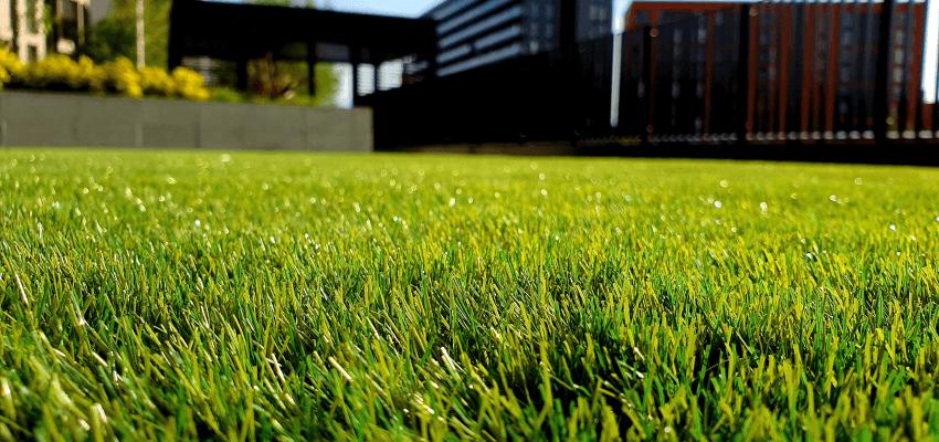 Jak wapnować trawnik
