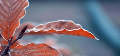 Zabezpieczanie roślin na zimę