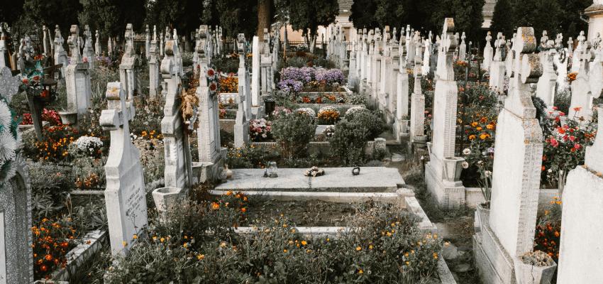 Jakie kwiaty na grób
