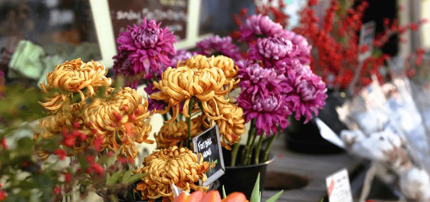 Jakie kwiaty posadzić na cmentarzu