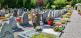 Jakie kwiaty na cmentarz