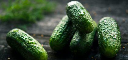 Jak sadzić ogórki - ogórek jak sadzić