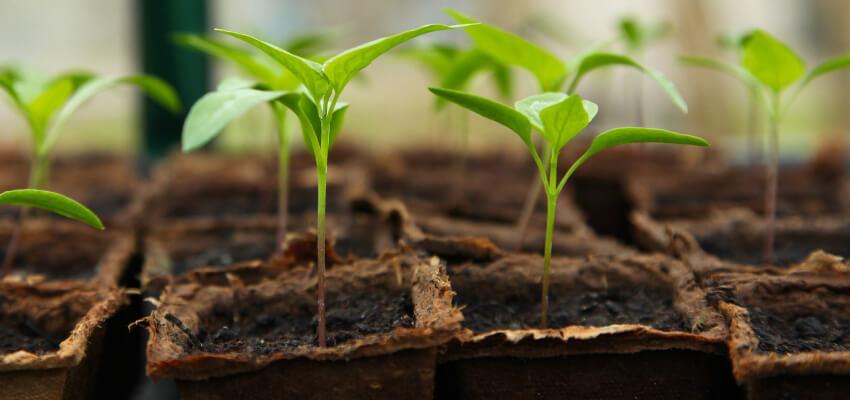 Co sadzić w kwietniu? Co siejemy w kwietniu?